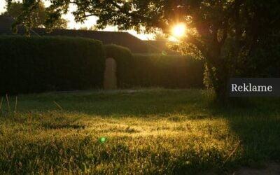 Vinkkejä puutarhanhoitoon: Näin loihdit naapuruston upeimman puutarhan
